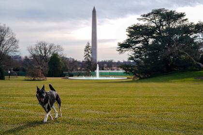 Покусавшего охрану пса Байдена отправили на переобучение