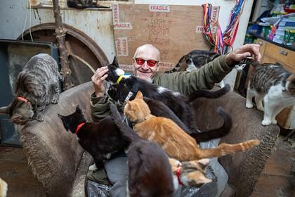 Холостой бездетный мужчина поселил у себя дома 70 кошек