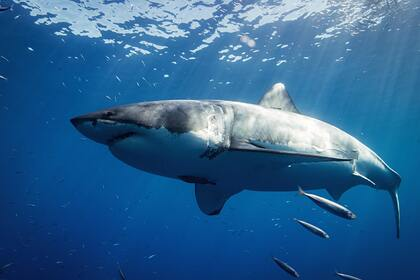 Акула набросилась на мужчину и растерзала его на глазах у посетителей пляжа